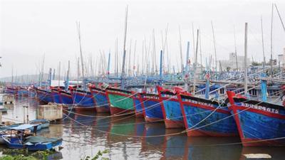 Bình Định xin đưa 2 cảng ra khỏi quy hoạch: Đúng đắn
