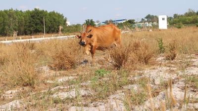 Tin nóng bất động sản tuần qua: Loạt dự án 'ôm đất' bỏ hoang tại Hà Nội vào tầm ngắm thu hồi