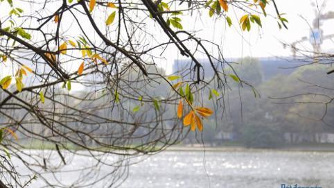 Hà Nội đẹp mộng mơ mùa lộc vừng thay lá
