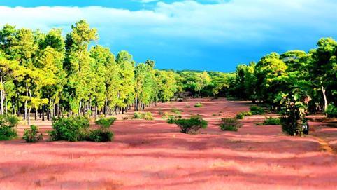 Đầu tư sân golf Đăk Đoa: Mất rừng thông 50 tuổi?