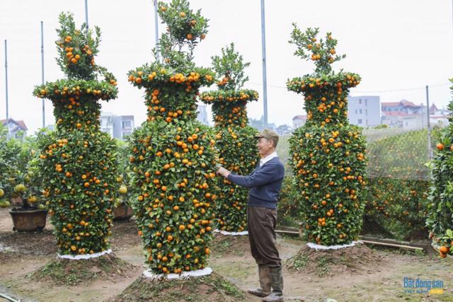 Chiêm ngưỡng vườn quất lục bình khổng lồ có giá hàng chục triệu đồng/cặp - Ảnh 11