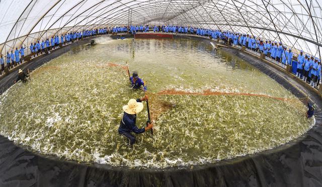 Khu nuôi tôm ứng dụng công nghệ cao của Tập đoàn Việt - Úc tại Bình Định.