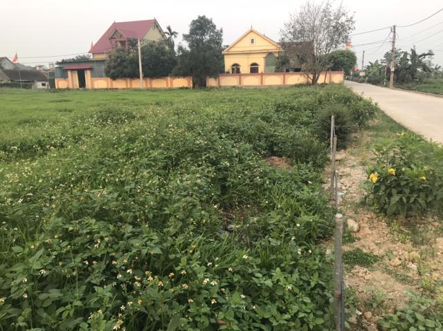 Giá đất nền tại các địa phương gần TP. Vinh như Nghi Lộc, Thái Hòa, Hoàng Mai có giá từ 12 -16 triệu đồng/m2.