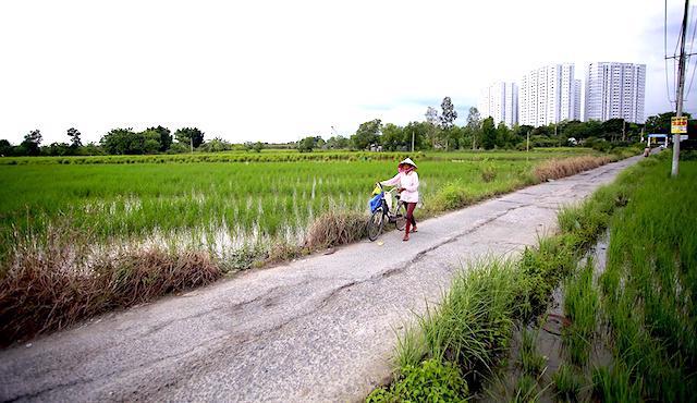 Hệ số điều chỉnh giá đất nông nghiệp tại TP.HCM vẫn chưa phù hợp.