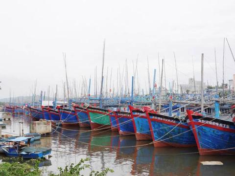 Bình Định xin đưa 2 cảng ra khỏi quy hoạch: Đúng đắn - Ảnh 1