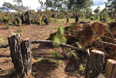 Dù được giao dự án từ năm 2010 nhưng đến nay KĐT Đại Ninh hầu như chưa xây dựng trong khi phần đất rừng trong dự án bị xâm hại.