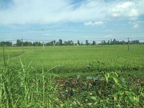 Dự án khu công nghiệp Kim Động của Công ty Cổ phần Tập đoàn đầu tư xây dựng DÐK sau 10 năm vẫn chỉ là cánh đồng.