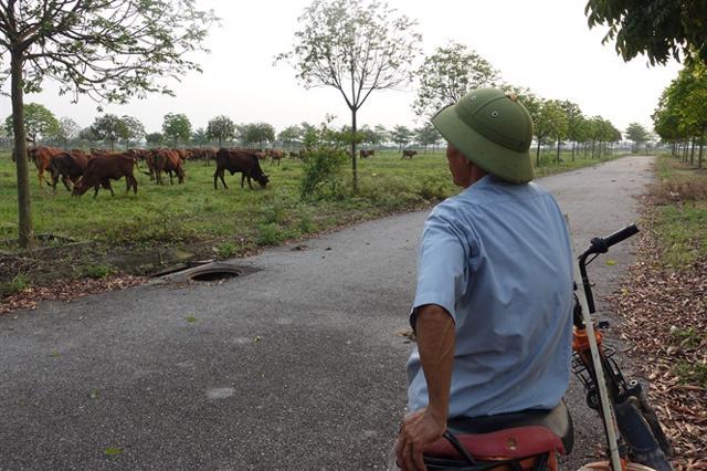 Hàng loạt chủ đầu tư ôm đất bỏ hoang trên địa bàn Hà Nội. Ảnh: Hoàng Anh.